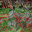 Trees in the Field of Anemones by Nira Dabush