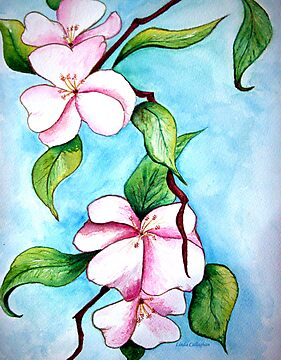Apple Blossoms  by © Linda Callaghan
