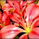 Alstroemeria Bouquet  by Chazagirl