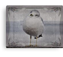 Seagull Affirmations Canvas Print