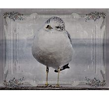 Seagull Affirmations Photographic Print