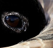 Goose Eye by Betsy  Seeton