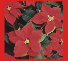 Christmas Red Poinsettia Plants  Kids Clothes