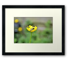 Fly on Buttercup Framed Print