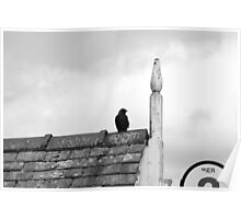 Bird on Windermere Pier  Poster