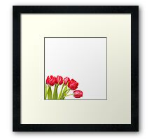 Humble Tulips.... Framed Print
