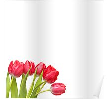 Humble Tulips.... Poster