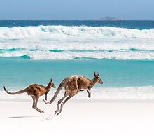 Kangaroos of Lucky Bay by Paul Fleming