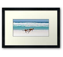 Kangaroos of Lucky Bay Framed Print