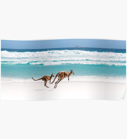 Kangaroos of Lucky Bay Poster