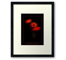 Three Gerberas Going to Party Framed Print