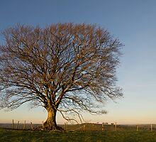 Raddon Hill top tree by peteton