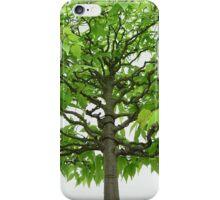 Bonsai Tree Iphone case iPhone Case/Skin
