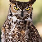 Give a Hoot by George Lenz