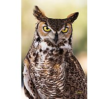 Give a Hoot Photographic Print
