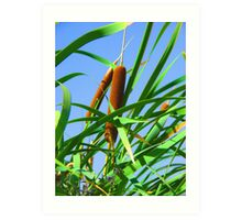 """Cattails"" by Carter L. Shepard Art Print"