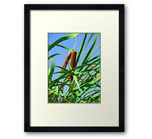 """Cattails"" by Carter L. Shepard Framed Print"