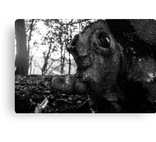 Head In the Trees Canvas Print
