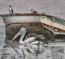 The pelican and friends by Freda Surgenor