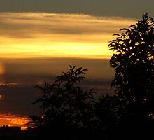 Sonoran Desert Twilight by ptosis