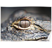 'Gator Eye 2 Poster