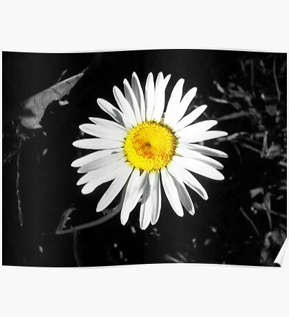 Color Pop Daisy Poster