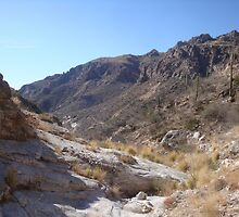 Sabino Canyon by Timothy  Ruf