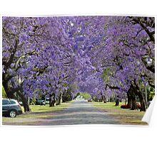 Jacaranda Delights: Kent St, Grafton, NSW Poster