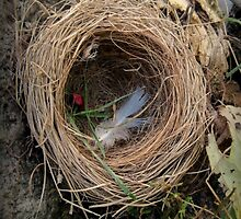 empty nest by James E. Thomas