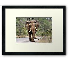 MAJESTIC BEAUTY - THE AFRICAN ELEPHANT – Loxodonta africana - AFRIKA OLIFANT Framed Print