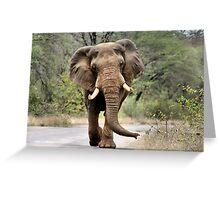 MAJESTIC BEAUTY - THE AFRICAN ELEPHANT – Loxodonta africana - AFRIKA OLIFANT Greeting Card
