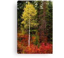 Lone Aspen in Fall Canvas Print