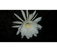 Queen of the Night 2014 Photographic Print