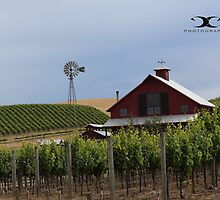 Red Barn among the Napa Valley by 2Canons