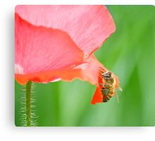 Boldness in the Garden Canvas Print