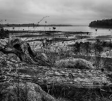 South Puget Sound Winter Landscape by Lynnette Peizer