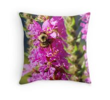 Bumble Bee on Purple Loosestrife Throw Pillow