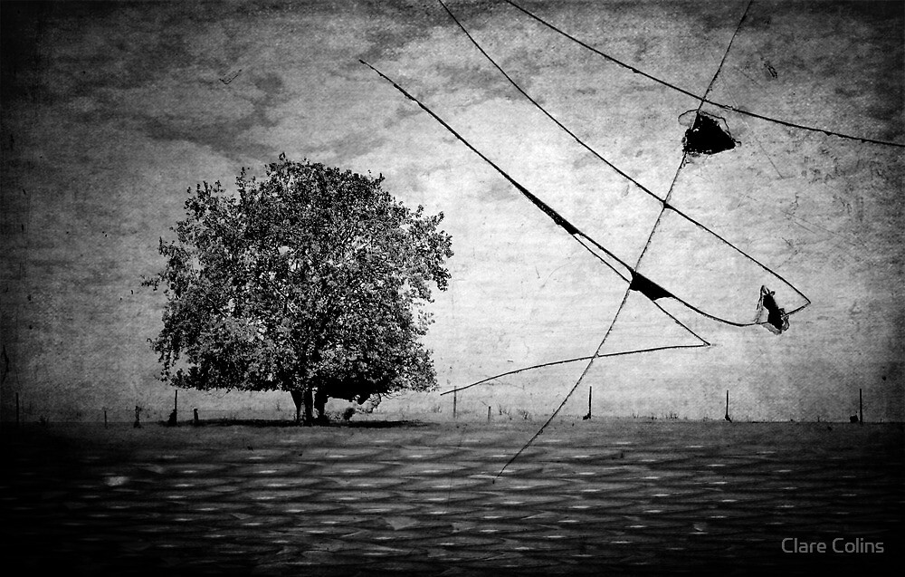 Tree 5 by Clare Colins