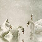 Feathered friends by Lyn Evans