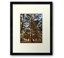 Trees on the Ridge Framed Print