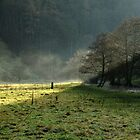 Sunbeams and Mist, Wolfscote Dale by Rod Johnson