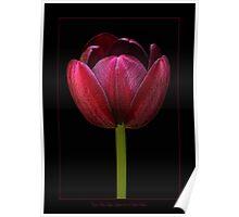Cafe Noir Tulip Poster