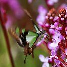 Nectar junky   -   precision approach by john  Lenagan