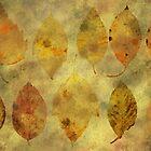 Leaf story by AhaC