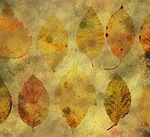 Leaf story by AhaC