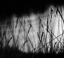 Herbs by Arina Borevich