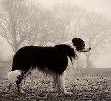 Dog in the Fog  by meg price