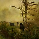 North Carolina Mountain Life by JKKimball