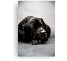 lovely Labrador Retriever  Canvas Print
