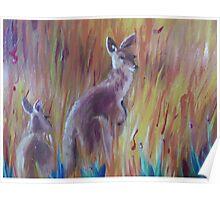 Kangaroos in Long Grass Poster